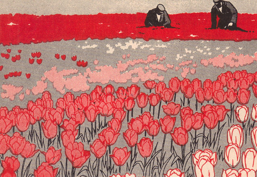 tulip fields illustrated by Curtiss Sprague