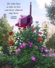 Flowers, butterflies & garden things