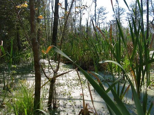 swamp stgeorge beaverdam beaverlodge beaverpond dorchestercounty