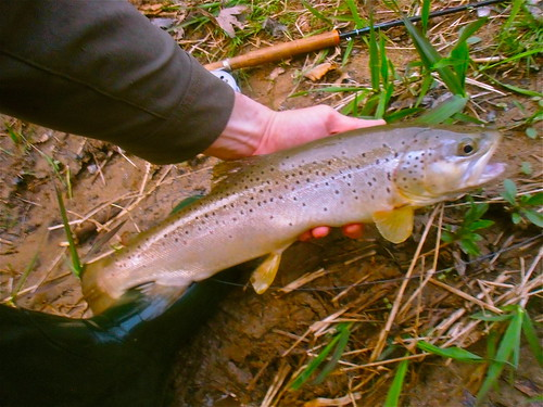 Scott fibertouch fly rod small water and big brown trout for Md trout fishing