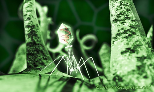 Featured - Bacteriophage Attacking