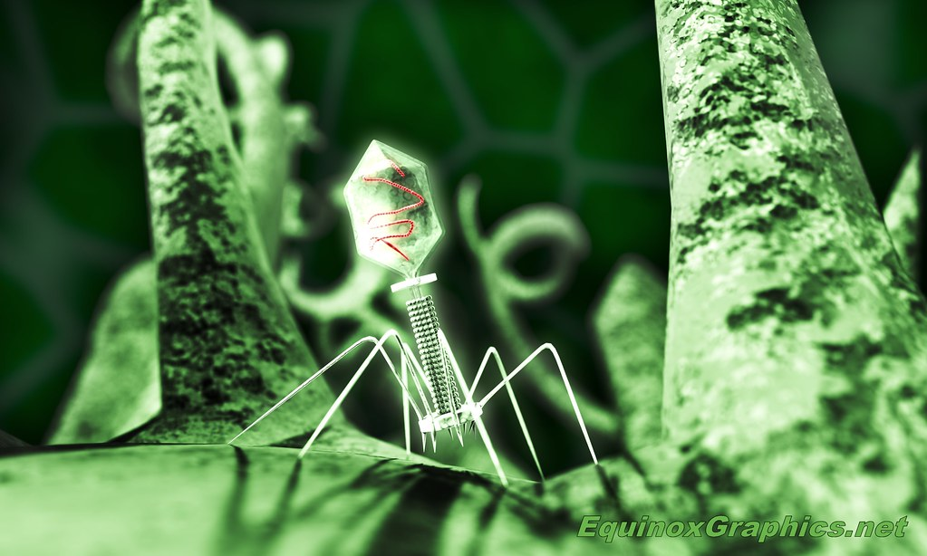 Image:Bacteriophage Attacking