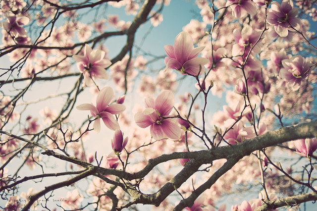 Spring - Top Reasons for you to buy a 35mm Lens