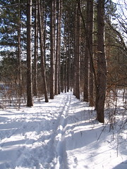 Cross Country Ski Trail