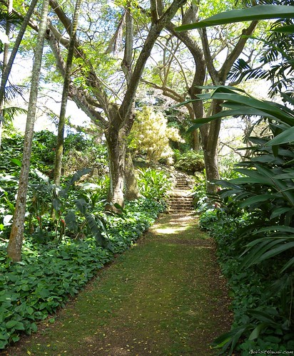 Hawaii vacation deals news june 24 2010 go visit hawaii - National tropical botanical garden ...