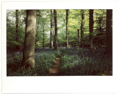 17-05-2010 Bluebell Woods