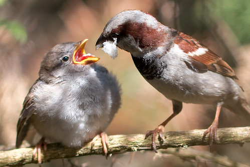 Sparrows feeding  Mistakes That Can Kill a Start-up