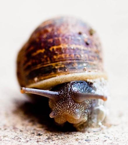 Snail-35 by Inkyhack
