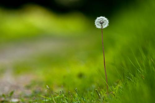 verde green nature skåne groen sweden vert dandelion sverige 2010 f40 höör ef200mmf28lusm canoneos5dmarkii ¹⁄₄₀₀sec