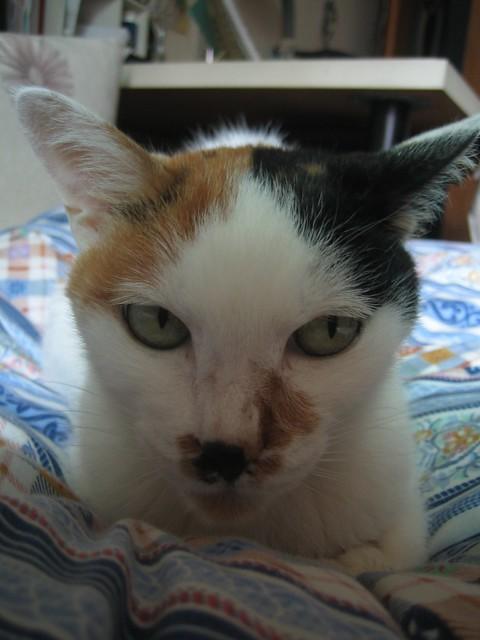 壁纸 动物 猫 猫咪 小猫 桌面 375_500 竖版 竖屏 手机