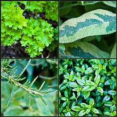 ♪ Parsley, Sage, Rosemary and Thyme  ♪ by Jill Clardy