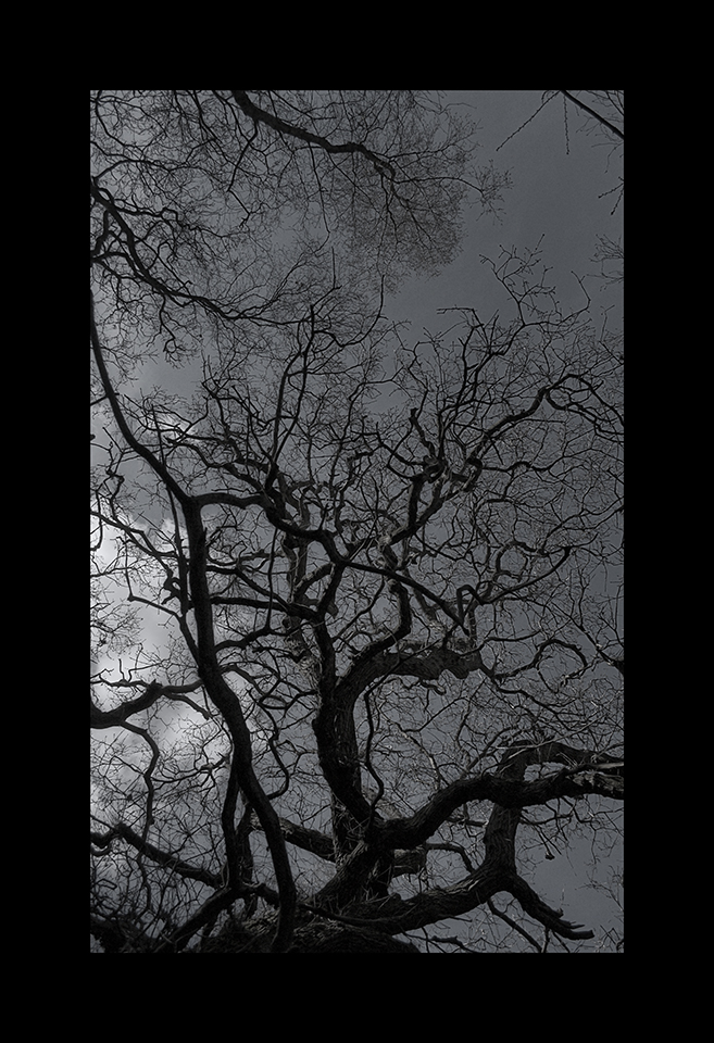Photography: Twisted Canopy by Nicholas M Vivian