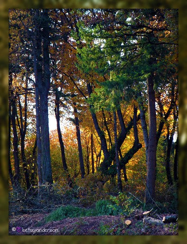 autumn fall forest landscape picnik