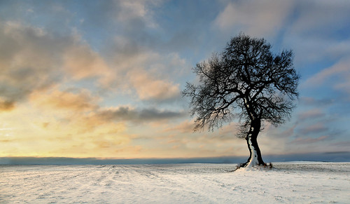 uk sky cloud sun snow tree field wales sunrise canon landscape eos dawn countryside interestingness bravo gallery britain cymru cardiff explore caerdydd lone 5d lonely agriculture wfc canoneos5d stmellons explored wentloog welshflickrcymru stevegarrington 6tttttt5ty