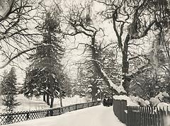 Winter at Djurgården, Stockholm, Sweden