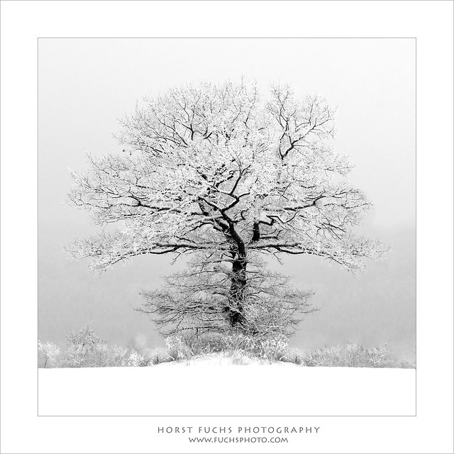 LONESOME TREE BW