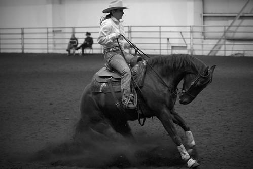 Reining Horse Sliding Stop