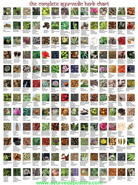 Ayurvedic herb chart flickr photo sharing