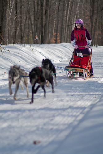 4378979627 fd4f735d8f Nice Sled Dog Racing photos