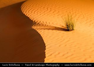 UAE - Sign of Life in the Empty Quarter Desert - Rub Al Khali