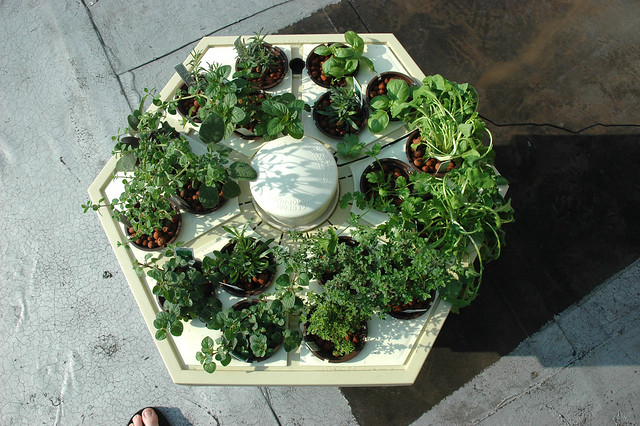 Hydroponic Herb Garden On The Roof Flickr Photo Sharing