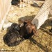 Newborn Twins in the Sunshine (1)