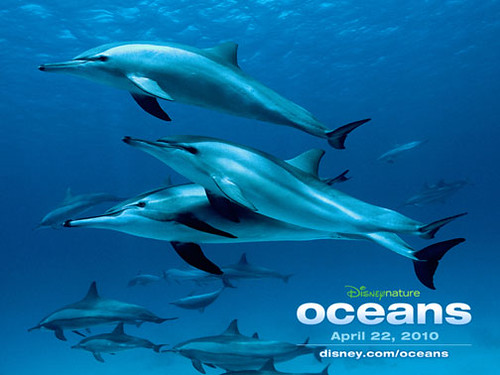 Oceans-dolphins