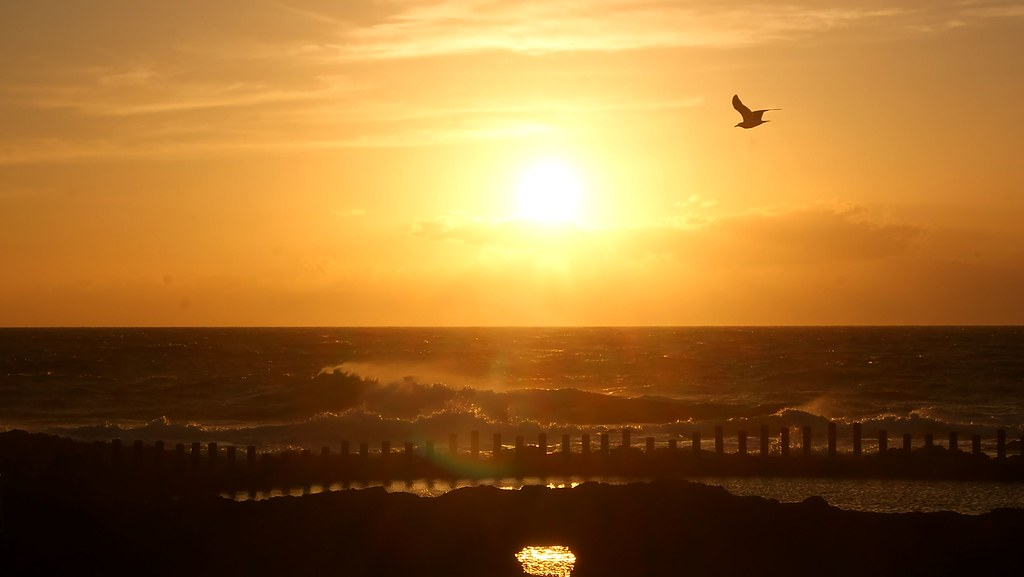 Gaviota en la puesta de sol
