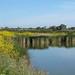 Shoreline-2010-05-02