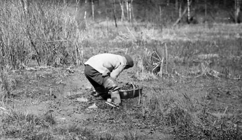 Chinese man picking watercress in High Park, [Toronto, Ontario.] / Un homme chinois cueuillant du cresson à High Park, Toronto, Ontario
