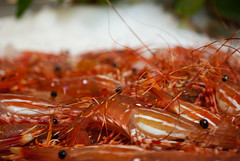 arthropod, spiny lobster, animal, seafood, invertebrate, macro photography, fauna, food, close-up,