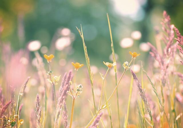 A Beautiful Sunny Day*** | yoshiko314 | Flickr  |Sunny Beautiful Day