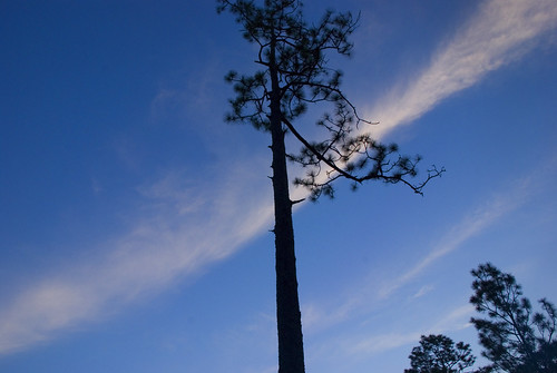 park camping trees sunset sky water forest river fire state campfire blackwater blueribbonwinner