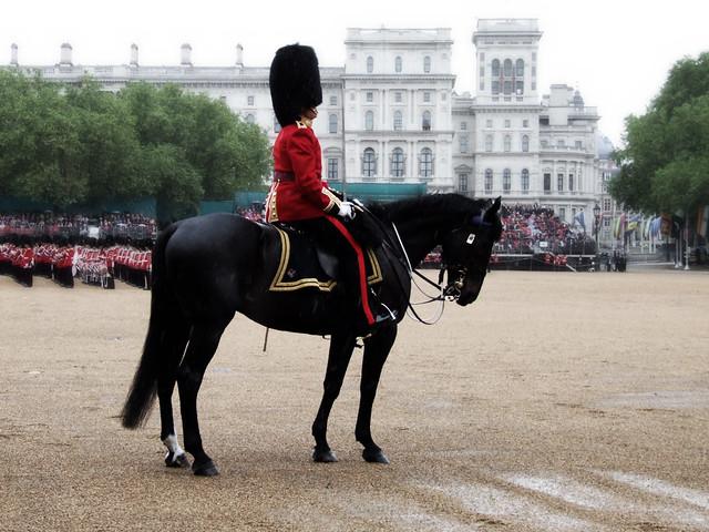 Mounted Grenadier Officer