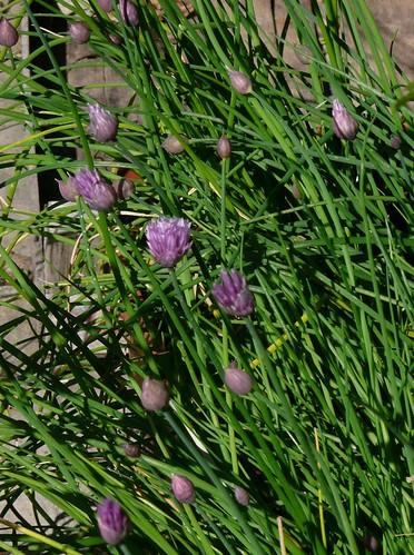 Marzo cosa piantare seminare e raccogliere nel giardino for Cosa piantare nell orto adesso