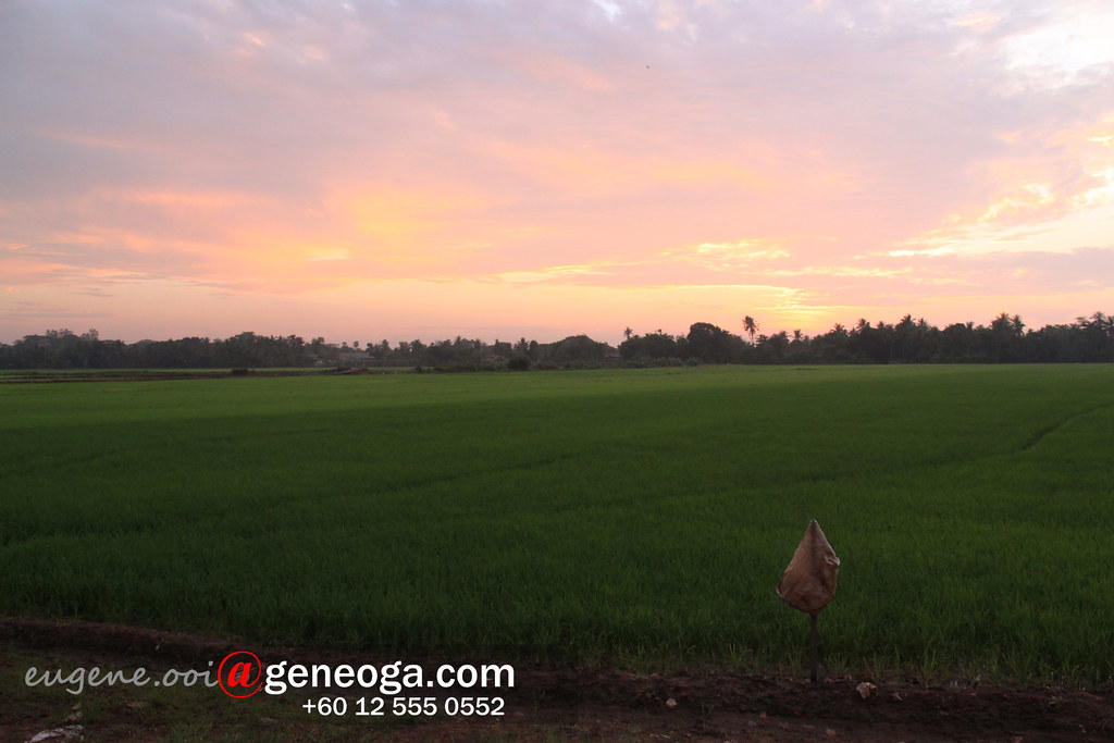 Sunrise over padi field