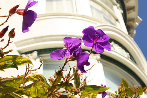 Broadway in Pacific Heights, San Francisco