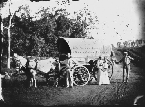 horses photographer queensland draperies wagons statelibraryofqueensland slq williamboag