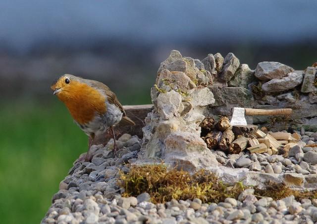 rambo the robin  micro garden bird table  (2)
