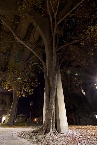 longexposure tree sc night conway southcarolina tokinaatx116prodx