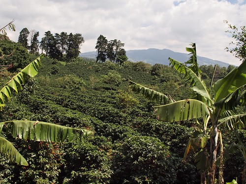Doka Coffee Plantation