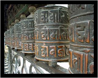 Temple Rolls