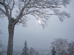 white sun in winter