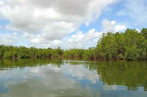 reflections mangroves reflexos thegambia áfrica mangais gambiariver laminlodge gâmbia riogâmbia gambiarivercreeks