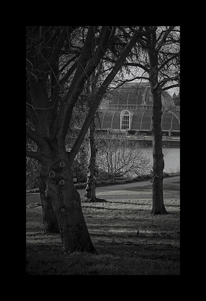 Photography: Palm House through Trees by Nicholas M Vivian