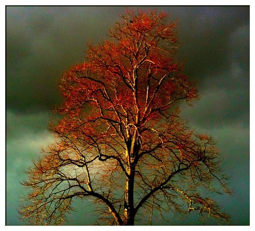 [iPhoneography] Dark sky and light on tree