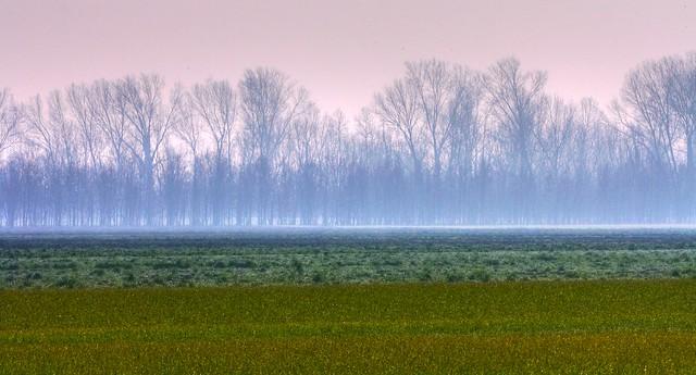 Early morning mist - La Nebbia, di primo mattino