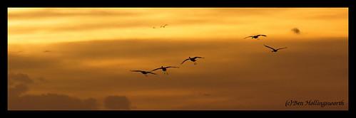 sunset birds clouds sandhillcranes platteriver canon400d ftkearneysra televivitar40056