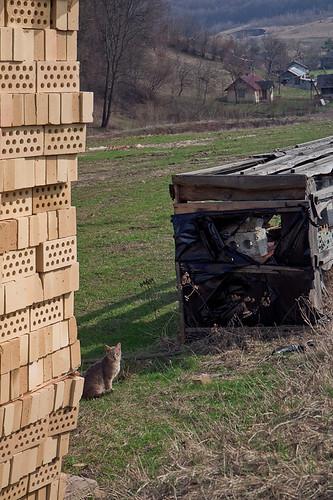 brick cat countryside ukraine univ ukrainiancountryside lvivregion lvivskaoblast унів