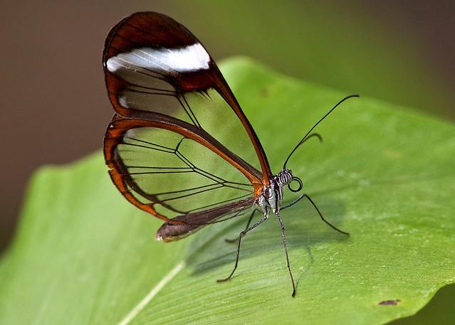 El Hermoso Escarabajo Tortuga Dorado